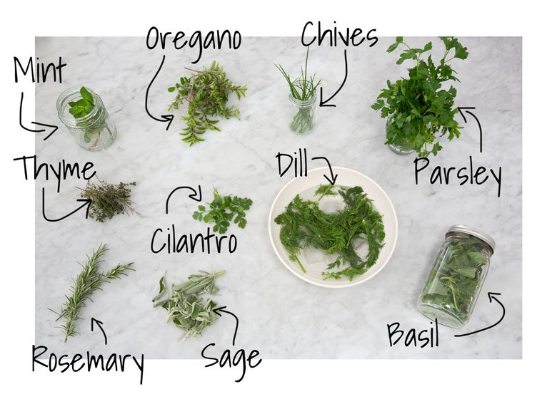 Herb map